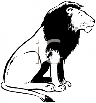 Royalty Free Clipart Image of a Side View of a Lion