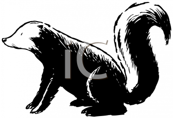 Royalty Free Clipart Image of a Skunk