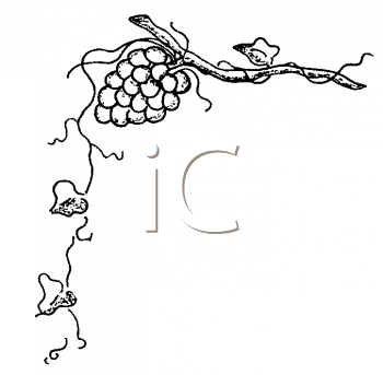 Royalty Free Clipart Image of a Grape and Vine Border
