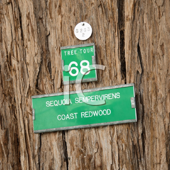 Royalty Free Photo of a Close-up of a Sign on the Bark of California Redwood Sequoia Tree