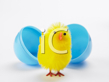 Royalty Free Photo of an Easter Chick in an Egg