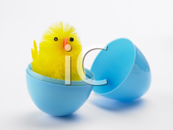 Royalty Free Photo of a Chick in a Plastic Egg