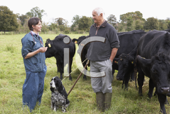 Royalty Free Photo of a Vet With a Farmer and His Cattle