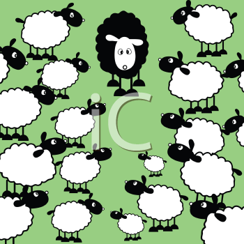 One black sheep amongst lots of white sheep