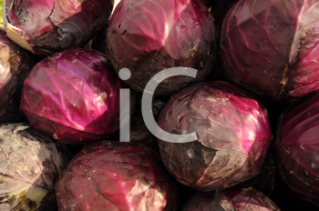 Royalty Free Photo of Red Cabbage