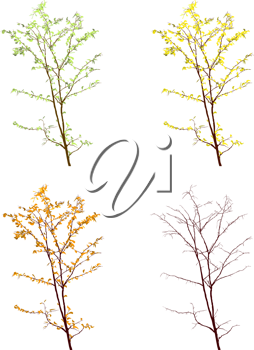 Four seasons view of a tree on white background