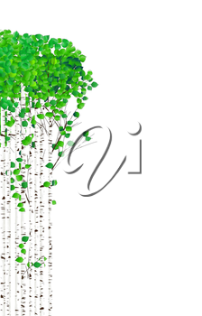 Watercolor birch trees with green leaves on white background