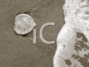 Seashore Discovery - sand dollar on beach