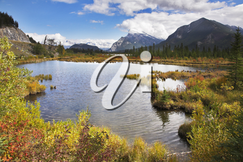 Royalty Free Photo of a Bog in Canada