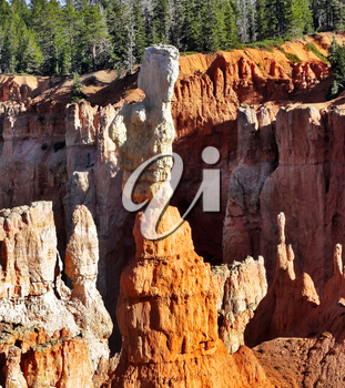 Royalty Free Photo of the Bryce Canyon in Utah