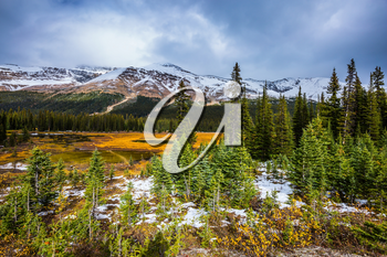 The Rocky Mountains in Canada. Wetland at the foot of the snow-capped mountains. Yellow grass and small lakes. The concept of active and ecological tourism