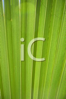 Royalty Free Photo of a Pleated Leaf