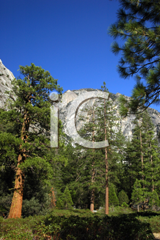 Royalty Free Photo of Redwood Trees in Kings Canyon National Park