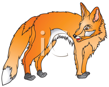Royalty Free Photo of a Fox