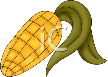 Royalty Free Clipart Image of Corn