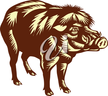Illustration of the Philippine warty pig or Sus philippensis standing viewed from the side on isolated white background done in retro woodcut style.