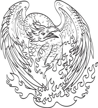 Line art drawing illustration of a phoenix, a mythological bird that cyclically regenerates or is otherwise born again, on fire viewed from front done in monoline tattoo style black and white.