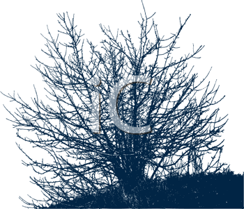 Royalty Free Clipart Image of a Bush