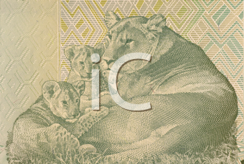 Royalty Free Photo of a Lioness Lying With Two Cubs on 20 Francs 2003 Banknote From Congo.