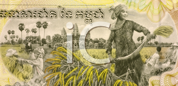 Royalty Free Photo of a Woman Harvesting Rice on 2000 Rieles 2007 Banknote from Cambodia.