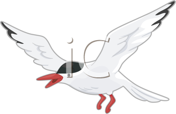 Royalty Free Clipart Image of an Arctic Tern