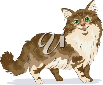 Illustration of Maine Coon Cat
