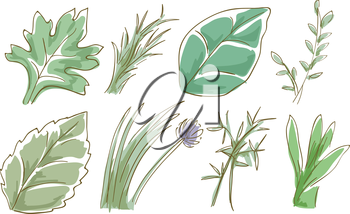 Sketchy Illustration Featuring Different Herbs