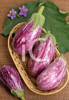 Royalty Free Photo of Striped Eggplants in a Basket