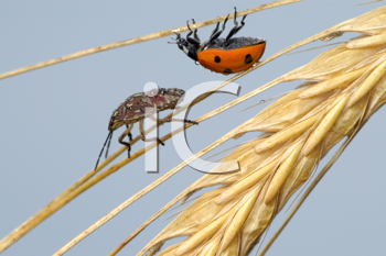 Royalty Free Photo of Two Bugs on a Plant