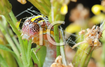 Royalty Free Photo of a Caterpillar on a Flower