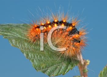 Royalty Free Photo of a Orange Caterpillar on a Leaf