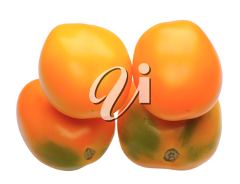 Multicolored tomatoes, isolated on a white background