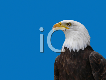 Royalty Free Clipart Image of an American Eagle