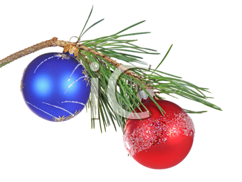 Christmas branch of a pine isolated on white background