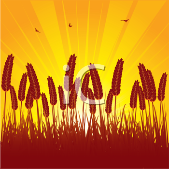 Royalty Free Clipart Image of a Hay Background