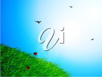 Spring Sunny Sky Background with Green Grass Flowers and Birds