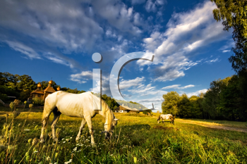 Royalty Free Photo of Horses Grazing in a Field