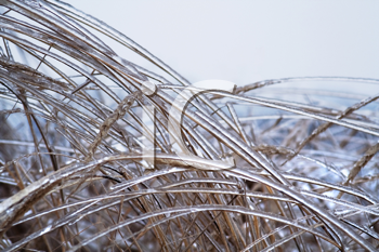 Royalty Free Photo of Icy Grass