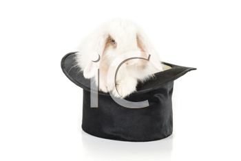 White rabbit at black hat isolated on a white background