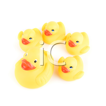 yellow ducks isolated on a white background