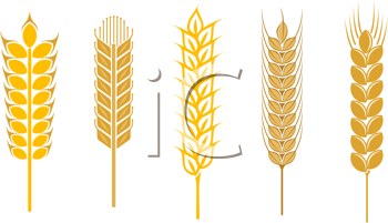 Royalty Free Clipart Image of a Cereal Grains