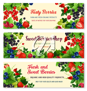 Berries vector banners set for berry shop or farmer market. Fresh harvest of blueberry or black currant and cranberry, garden raspberry and gooseberry. Juicy fruits of strawberry, briar and redcurrant