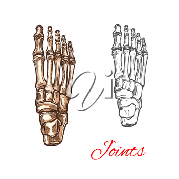 Human foot bones and joints skeleton vector sketch body anatomy icon. Isolated symbol of feet and toes limbs structure of leg organ for anatomical orthopedic or medical surgery design element