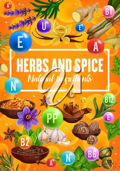 Vitamins in spices and herbs, organic seasonings and herbal cooking flavoring ingredients. Vector vanilla, ginger and lemongrass herb, turmeric and nutmeg spices with basil and savory or rosemary
