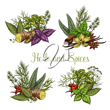 Herbs and spices seasonings bunches. Vector sketch tarragon, oregano or ginger root and vanilla, culinary condiment rosemary, peppermint and cinnamon and bay leaf or farm lemongrass