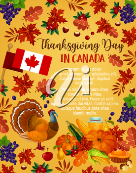 Thanksgiving day in Canada greeting poster. Vector design of Canadian flag, traditional holiday turkey and fruit pie, pumpkin, corn and berry or grape fruit harvest, maple or rowan leaf and oak acorn