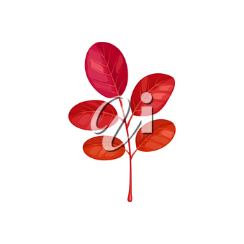 Autumn leaves on branch, acacia tree fall foliage, vector isolated icon. Acacia leaf on branch twig, red autumn leaves, fall season plants