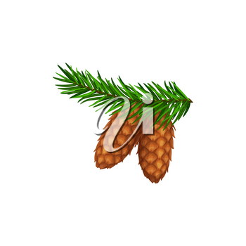 Cones on pine or fir tree branch, forest pinecone isolated vector icon. Christmas winter or Thanksgiving autumn season holiday symbol of cedar, spruce or confer tree cones on green branch
