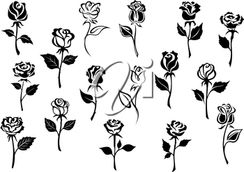 Black and white elegance roses flowers set for any floral design or love concept