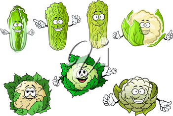 Funny cartoon cauliflower and chinese cabbage vegetables with hands, isolated on white background
